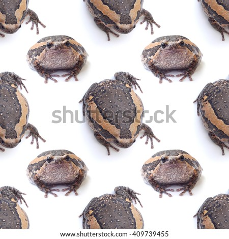 bullfrog isolate on white pattern background seamless design - stock photo