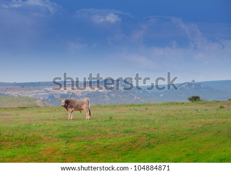 Bullock standing on the meadow - stock photo
