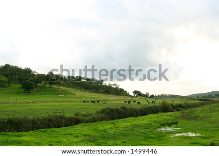 Bulls and Storks on a green field - stock photo