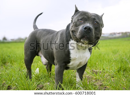 bully with big smile