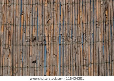 bulrush fence - stock photo