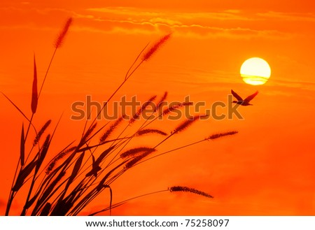 bulrushes against sunlight over sky background in sunset - stock photo