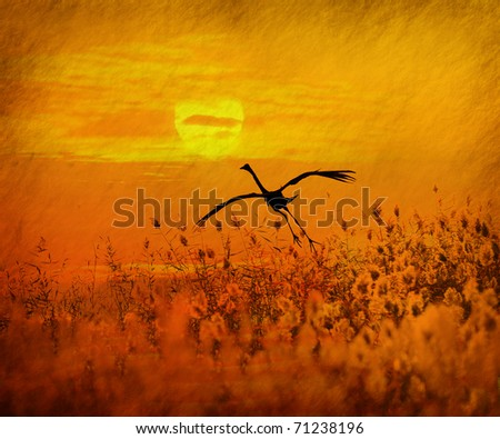 bulrushes against sunlight over sky background in sunset with a flighting bird - stock photo