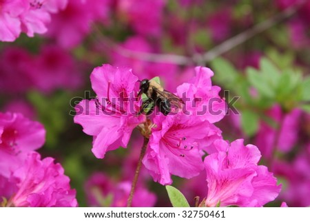Bumble Bee in Flowers