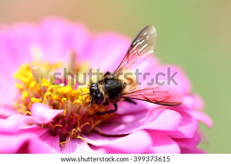 bumble bee on flower, honey bee