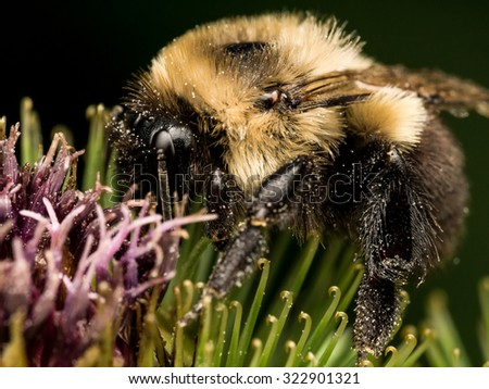 Bumble bee profile on green and purple flower - stock photo