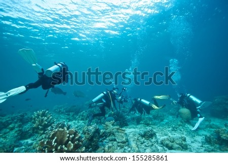 bumphead parrot fish with divers  - stock photo