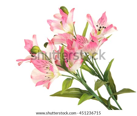 bunch beautiful branch flowering-plant with pink flower, on white background, isolated - stock photo