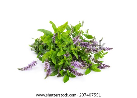 Bunch blooming mint isolated on white background. - stock photo