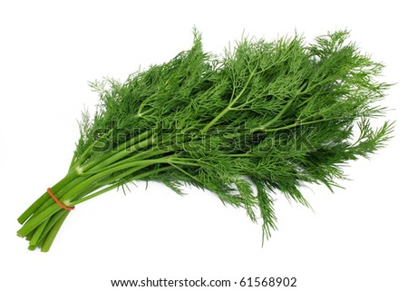bunch dill herb isolated on white background - stock photo