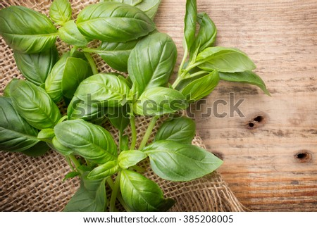 Bunch fresh basil on a wooden background. Aromatic spice. - stock photo