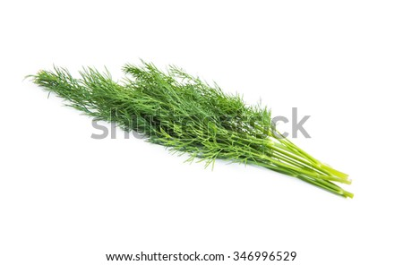bunch fresh dill herb isolated on white background