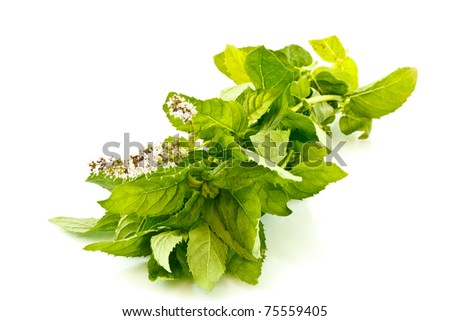 bunch fresh mint isolated on white background