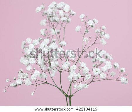 Bunch od baby's-breath flowers on a  light pink background - stock photo