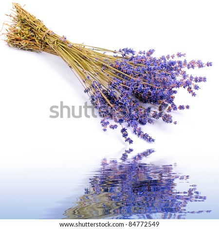 Bunch of a French lavender. - stock photo