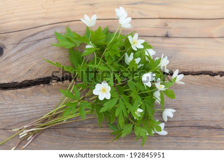 bunch of anemone nemorosa on a wooden bench - stock photo