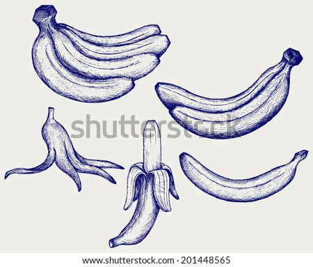 Bunch of bananas, peeled banana and banana peel. Doodle style. Raster version - stock photo