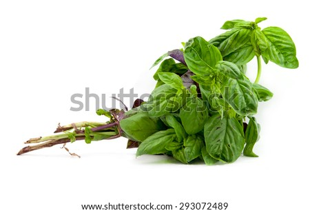 bunch of basil isolated on white - stock photo