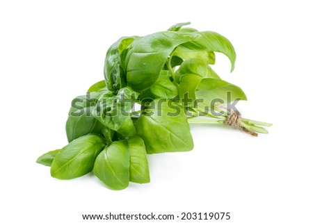 Bunch of basil isolated on white background - stock photo