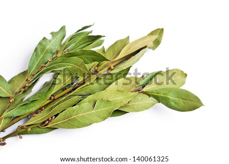 bunch of bay leaves