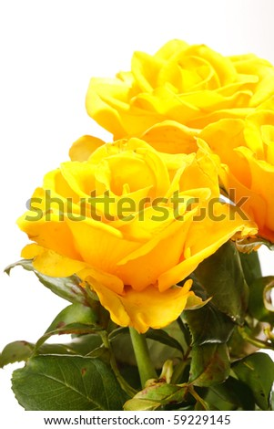 Bunch of beautiful roses - stock photo