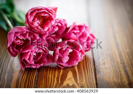 Bunch of beautiful tulips  - stock photo