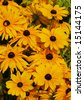 bunch of black eyed susan flowers - stock photo