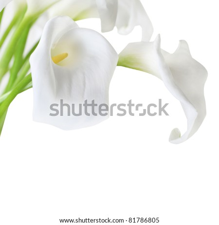 Bunch of Cala Lilies in high key - stock photo