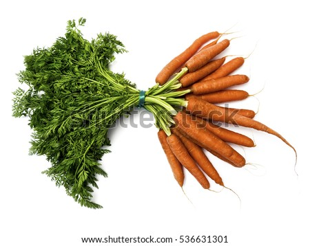 Bunch of carrots; bunch of fresh carrots isolated on white ground