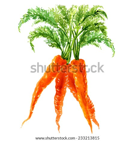 Bunch of carrots with leaves isolated - stock photo