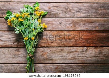 Bunch of celandine on wooden background, medicinal herb - stock photo