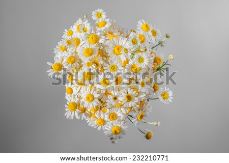Bunch of chamomiles on gray - stock photo