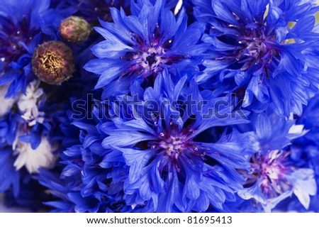 bunch of cornflowers as background. close up