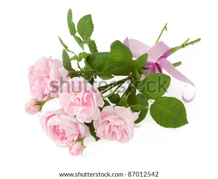 Bunch of cream roses isolated on white - stock photo