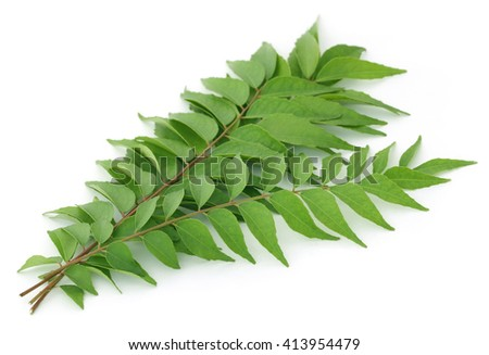 Bunch of curry leaves over white background - stock photo