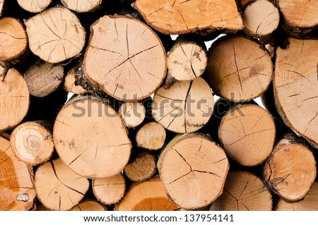 Bunch of cuts tree in full frame - stock photo