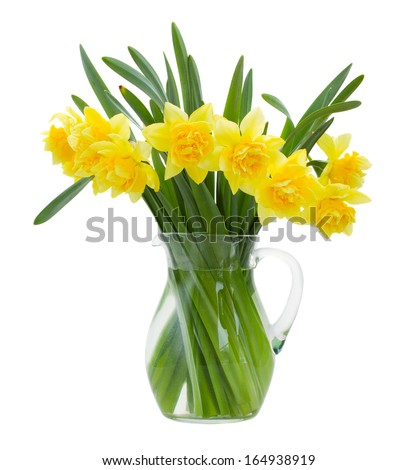 bunch  of daffodils in vase isolated on white background - stock photo