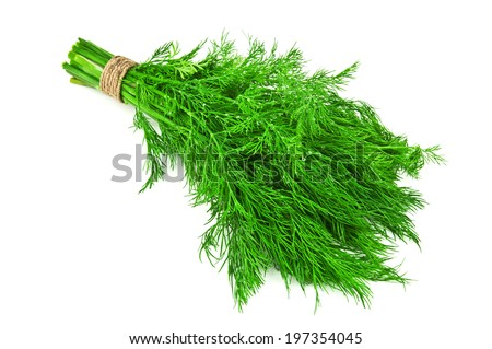 bunch of dill on white - stock photo
