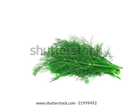 Bunch of dill on white background. Isolated