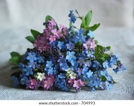 Bunch of forget-me-not flowers - stock photo