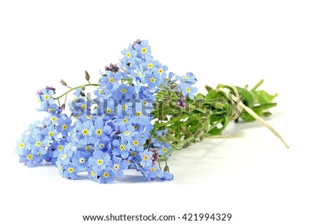 bunch of forget-me-not isolated on white background