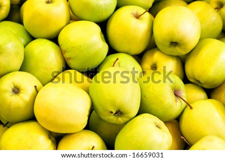 Bunch of fresh and sweet yellow apples - stock photo