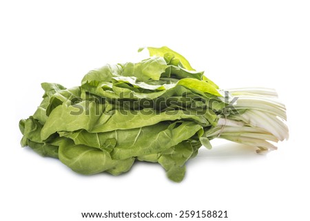 Bunch of fresh chard isolated on a white background - stock photo