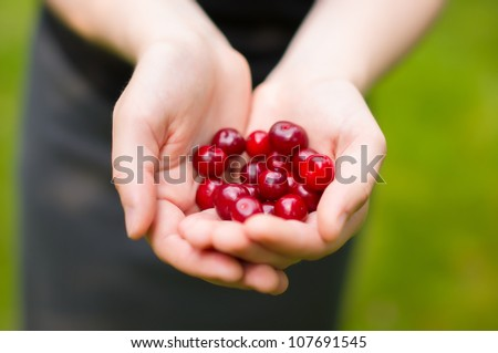 Bunch of fresh cherry in hands - stock photo
