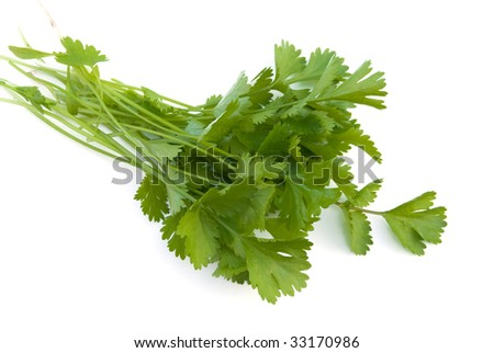 Cilantro isolated Stock Photos, Images, & Pictures | Shutterstock