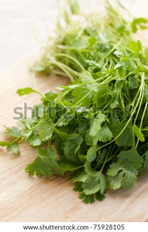 Bunch of fresh cilantro on wooden background - stock photo