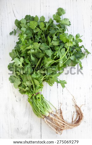 Bunch of fresh coriander or cilantro over distressed white wooden background.  Overhead view. - stock photo