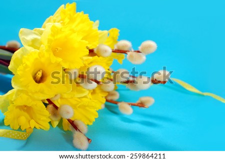 bunch of fresh daffodils and catkins on blue background for easter  - stock photo