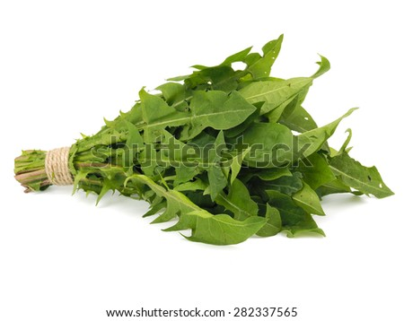 Bunch of fresh dandelion leaves on a white background - stock photo