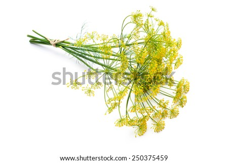 Bunch of fresh dill with flower isolated on white - stock photo